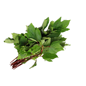 Picture of Gongura 3 nos