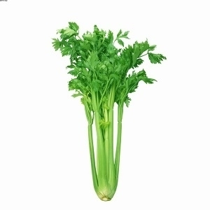 Picture of Celery 500g
