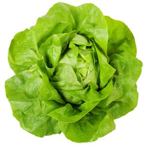 Picture of Lettuce Iceberg 1kg