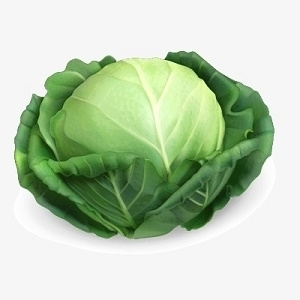 Picture of Cabbage Chinese Light Green 500g